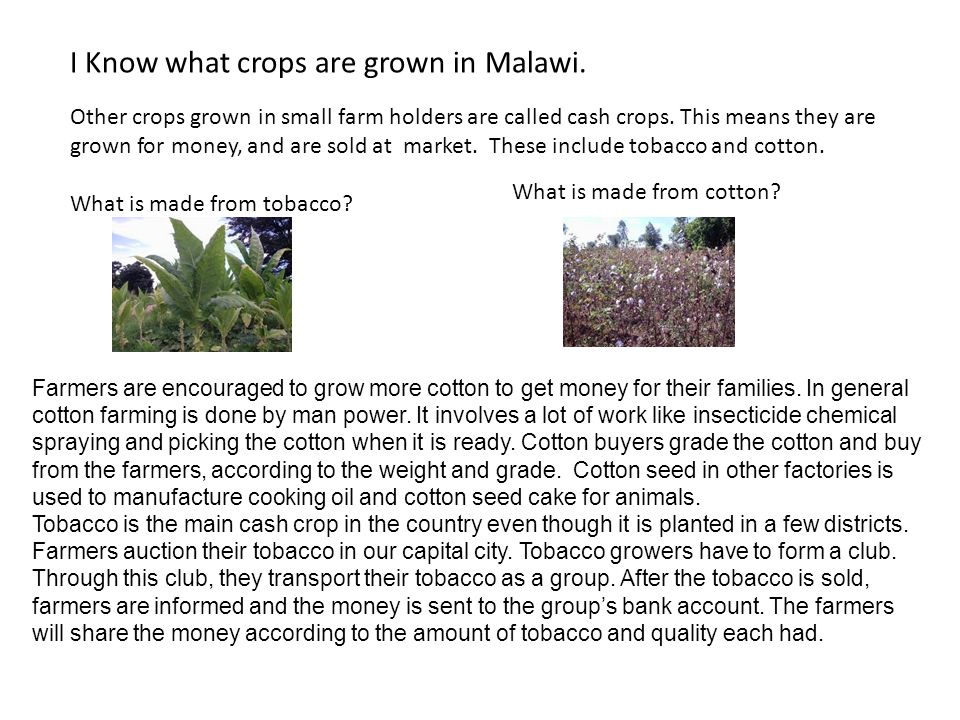 I Know what crops are grown in Malawi.