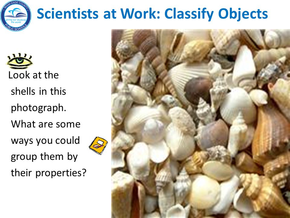 Scientists at Work: Write one observation, one inference and one opinion about what you see in the photo.