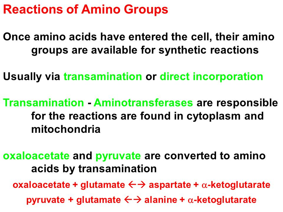 Reactions of Amino Groups Once amino acids have entered the cell, their amino groups are available for synthetic reactions Usually via transamination or direct incorporation Transamination - Aminotransferases are responsible for the reactions are found in cytoplasm and mitochondria oxaloacetate and pyruvate are converted to amino acids by transamination oxaloacetate + glutamate  aspartate +  -ketoglutarate pyruvate + glutamate  alanine +  -ketoglutarate
