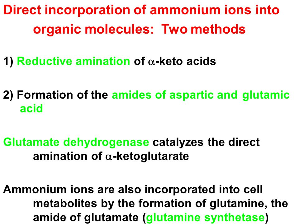 Direct incorporation of ammonium ions into organic molecules: Two methods 1) Reductive amination of  -keto acids 2) Formation of the amides of aspartic and glutamic acid Glutamate dehydrogenase catalyzes the direct amination of  -ketoglutarate Ammonium ions are also incorporated into cell metabolites by the formation of glutamine, the amide of glutamate (glutamine synthetase)