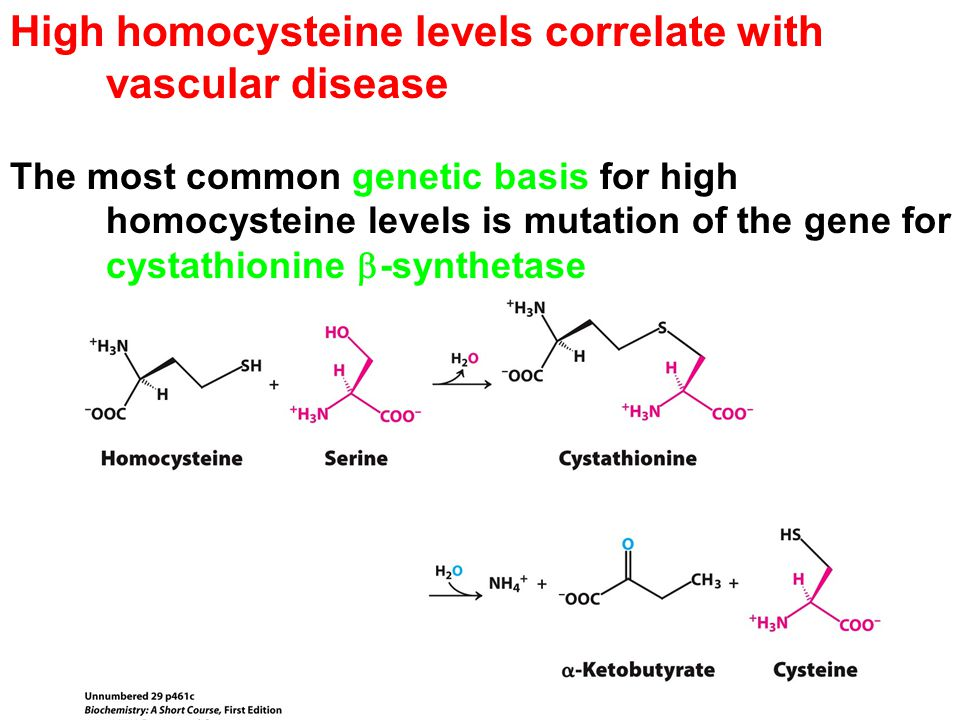 High homocysteine levels correlate with vascular disease The most common genetic basis for high homocysteine levels is mutation of the gene for cystathionine  -synthetase