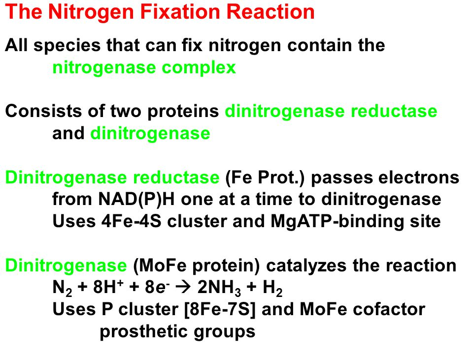The Nitrogen Fixation Reaction All species that can fix nitrogen contain the nitrogenase complex Consists of two proteins dinitrogenase reductase and dinitrogenase Dinitrogenase reductase (Fe Prot.) passes electrons from NAD(P)H one at a time to dinitrogenase Uses 4Fe-4S cluster and MgATP-binding site Dinitrogenase (MoFe protein) catalyzes the reaction N 2 + 8H + + 8e -  2NH 3 + H 2 Uses P cluster [8Fe-7S] and MoFe cofactor prosthetic groups