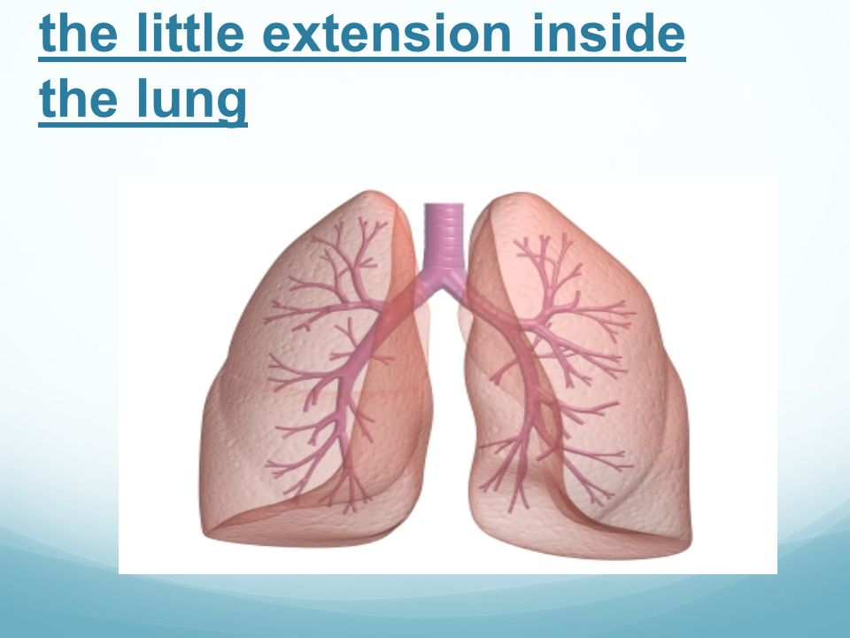 Bronchi Bronchioles are the little extension inside the lung