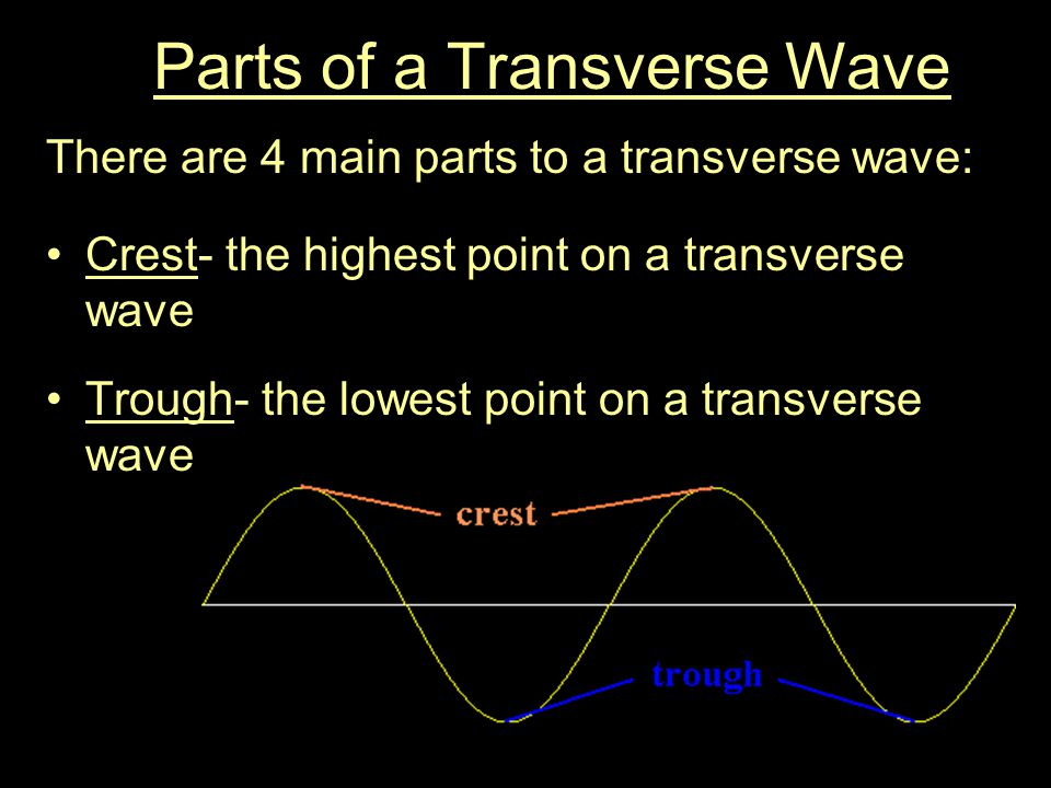 Parts of a Transverse Wave There are 4 main parts to a transverse wave: Crest- the highest point on a transverse wave Trough- the lowest point on a transverse wave
