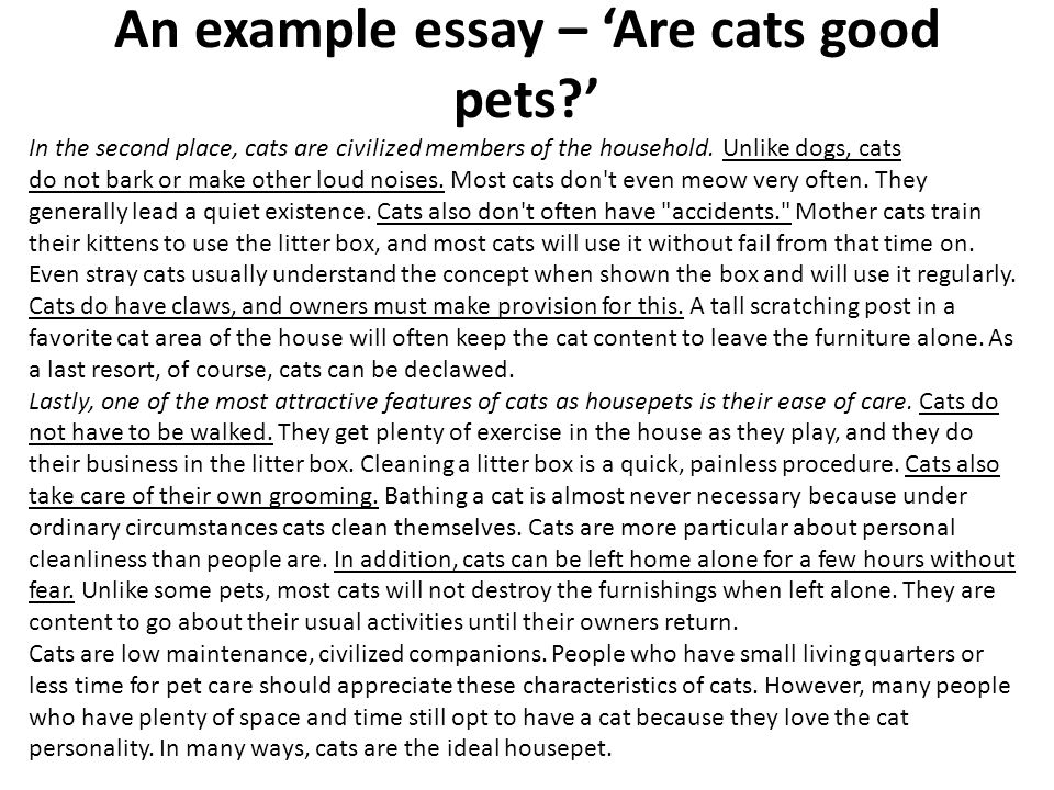 as a level business studies essay writing mr spicer ppt  an example essay are cats good pets in the second place cats
