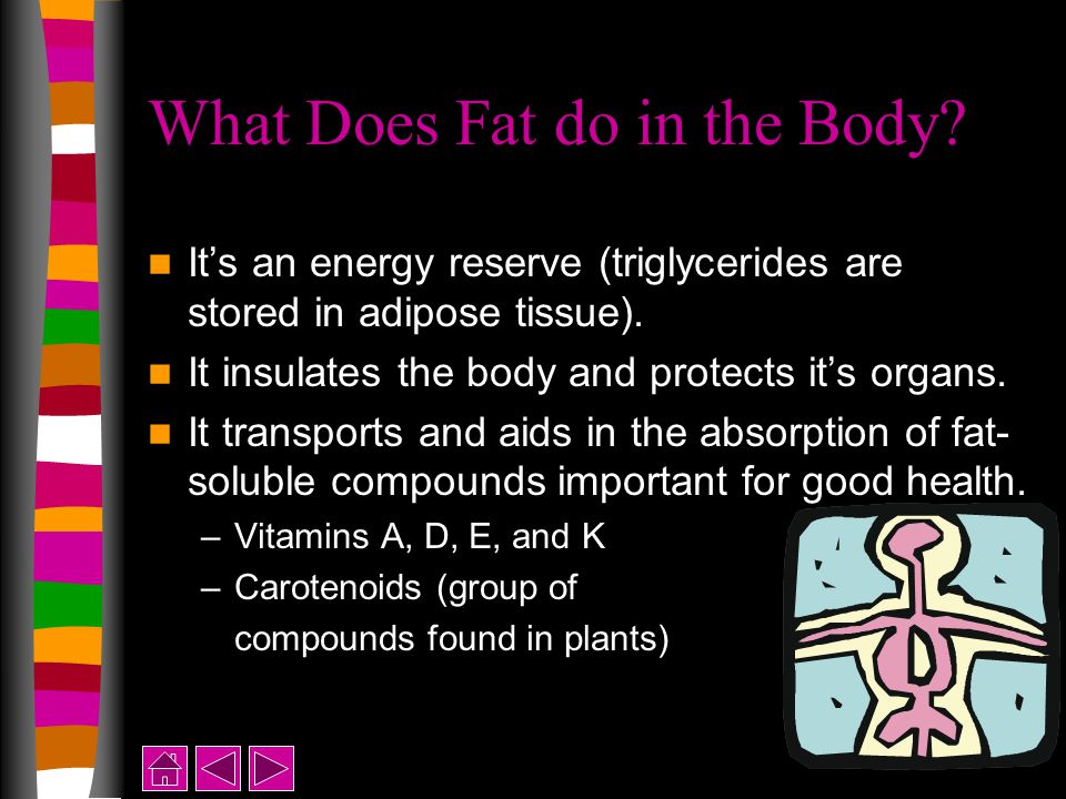 What Does Fat do in the Body. It's an energy reserve (triglycerides are stored in adipose tissue).