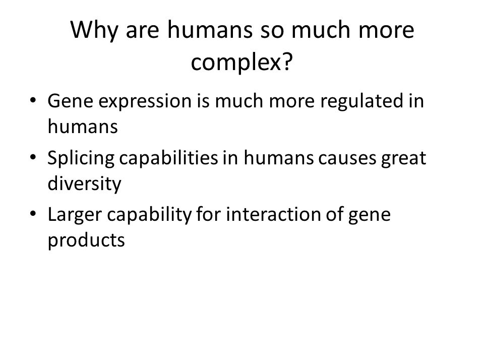 Why are humans so much more complex.