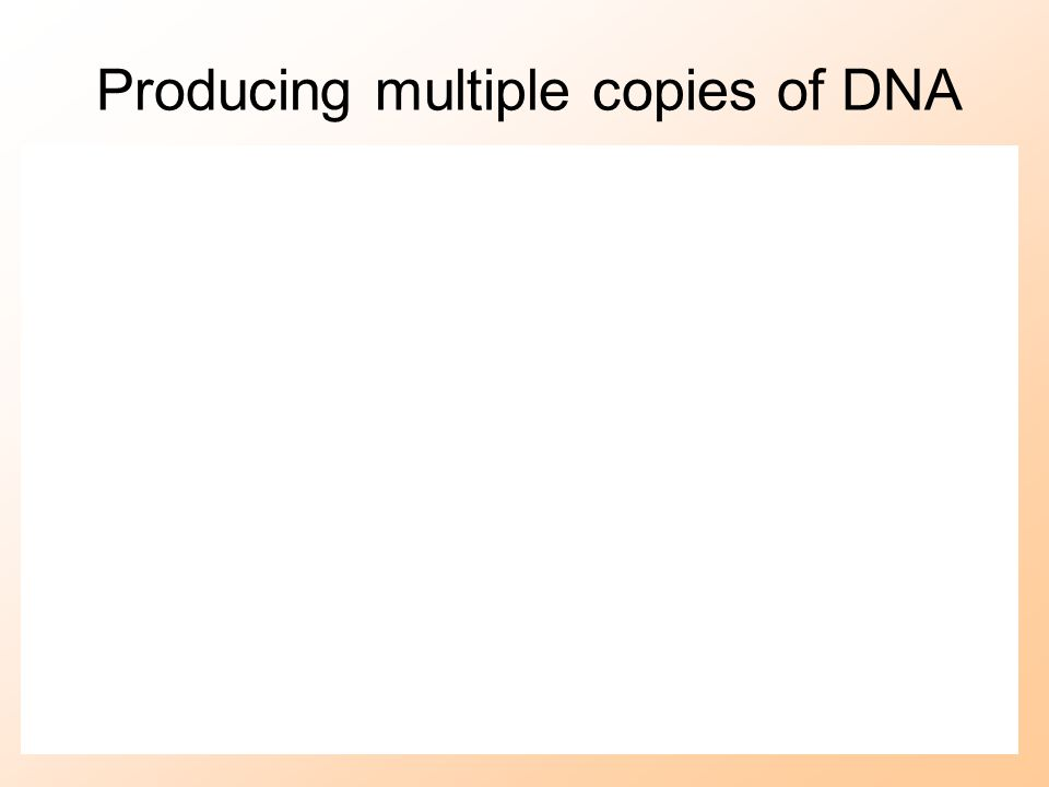 Producing multiple copies of DNA