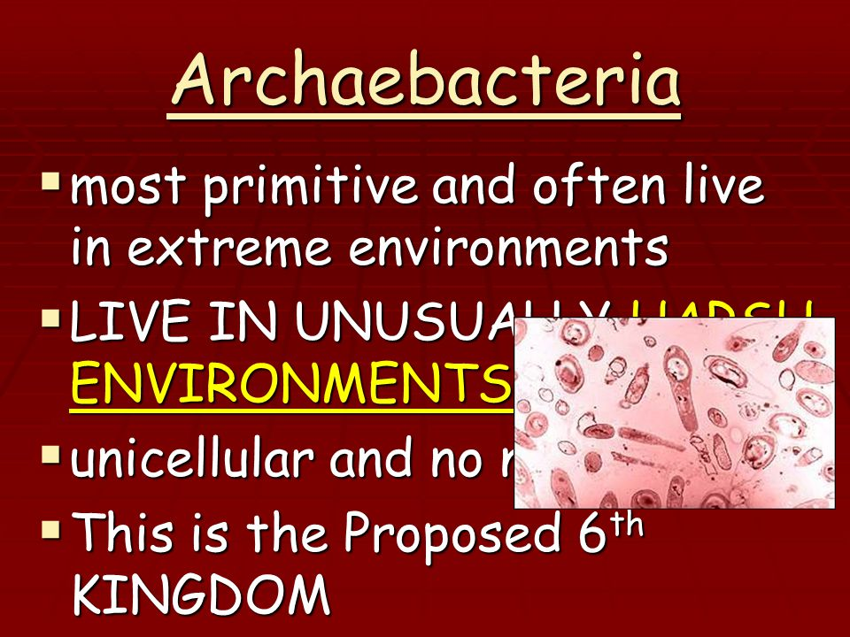 Archaebacteria  most primitive and often live in extreme environments  LIVE IN UNUSUALLY HARSH ENVIRONMENTS  unicellular and no nucleus  This is the Proposed 6 th KINGDOM  There are 3 types:  salt loving, heat loving & methane loving