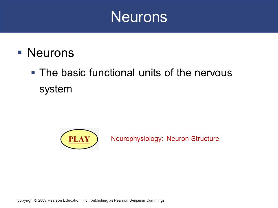 Copyright © 2009 Pearson Education, Inc., publishing as Pearson Benjamin Cummings Neurons  Neurons  The basic functional units of the nervous system Neurophysiology: Neuron Structure