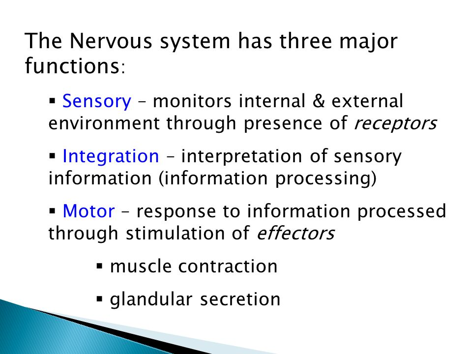 The Nervous system has three major functions :  Sensory – monitors internal & external environment through presence of receptors  Integration – interpretation of sensory information (information processing)  Motor – response to information processed through stimulation of effectors  muscle contraction  glandular secretion