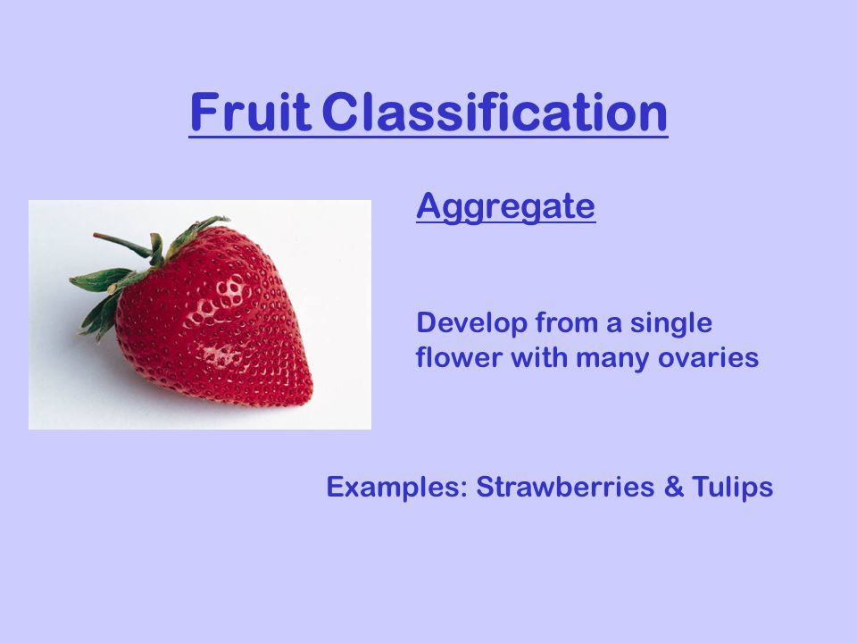 Fruit Classification Aggregate Develop from a single flower with many ovaries Examples: Strawberries & Tulips