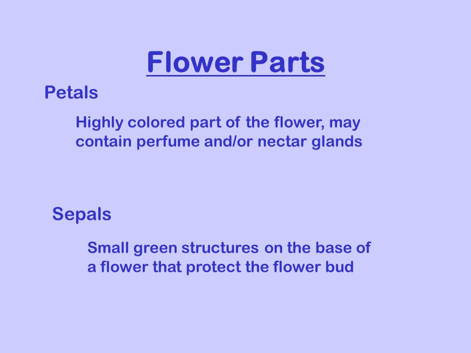 Flower Parts Petals Highly colored part of the flower, may contain perfume and/or nectar glands Sepals Small green structures on the base of a flower that protect the flower bud