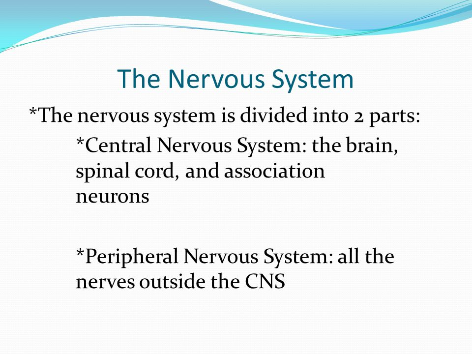 The Nervous System *The nervous system is divided into 2 parts: *Central Nervous System: the brain, spinal cord, and association neurons *Peripheral Nervous System: all the nerves outside the CNS