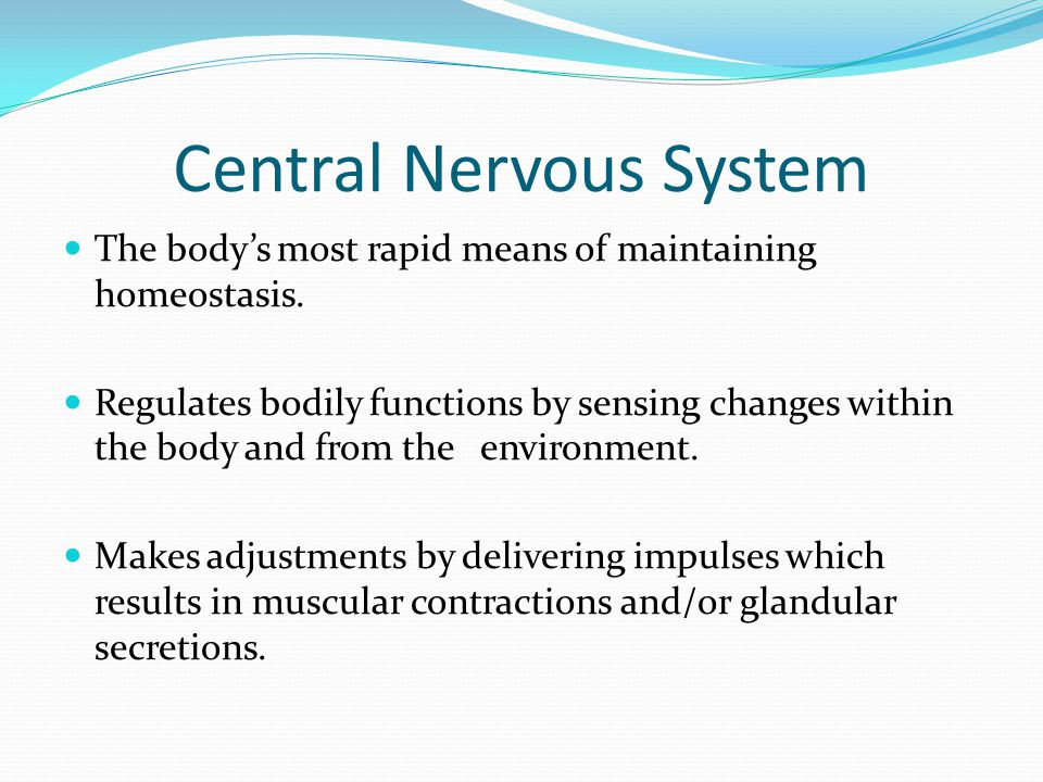 Central Nervous System The body's most rapid means of maintaining homeostasis.