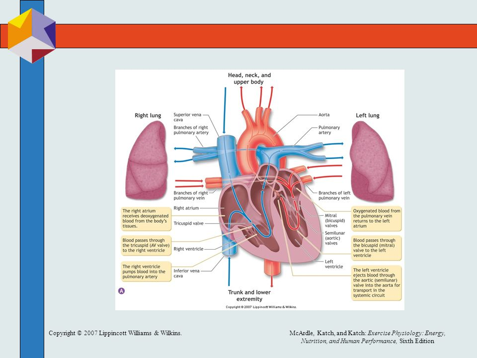Wunderbar Anatomie Zertifizierungsprogramm Zeitgenössisch - Anatomie ...
