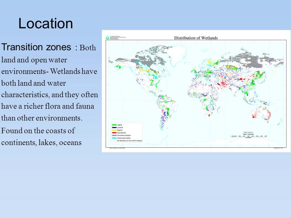 Location Transition zones : Both land and open water environments- Wetlands have both land and water characteristics, and they often have a richer flora and fauna than other environments.