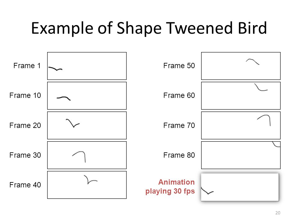 Example of Shape Tweened Bird 20 Frame 1 Frame 10 Frame 20 Frame 30 Frame 40 Frame 50 Frame 60 Frame 70 Frame 80 Animation playing 30 fps