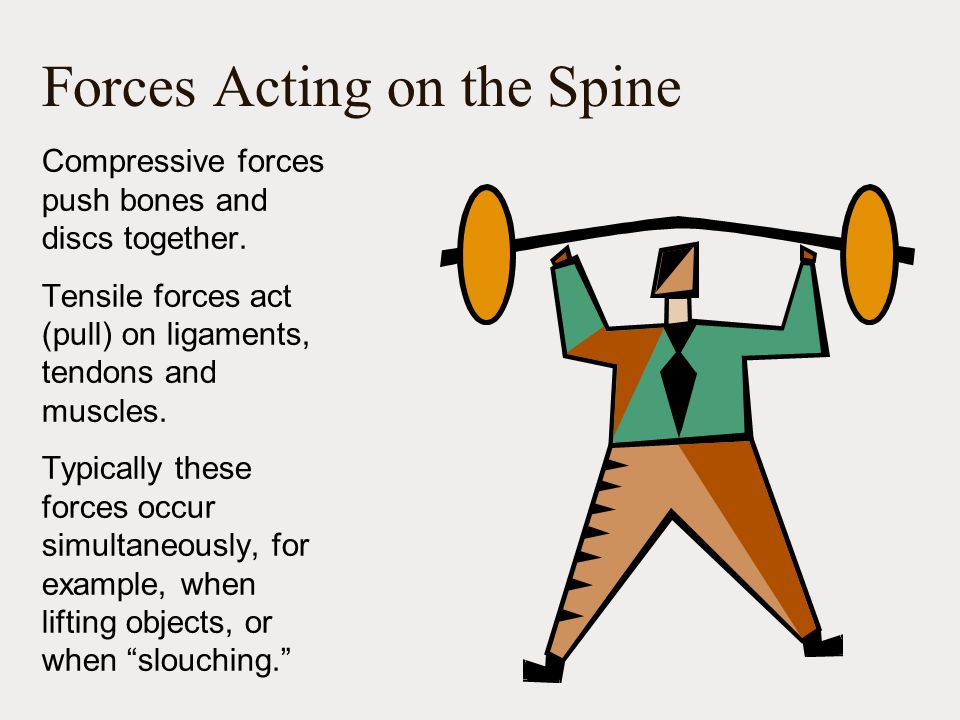 Forces Acting on the Spine Compressive forces push bones and discs together.