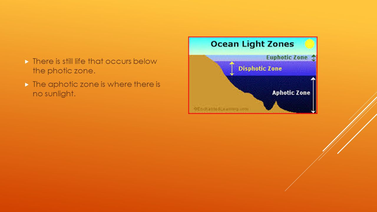  There is still life that occurs below the photic zone.  The aphotic zone is where there is no sunlight.