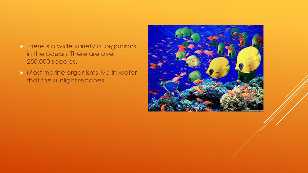  There is a wide variety of organisms in the ocean. There are over 250,000 species.  Most marine organisms live in water that the sunlight reaches.