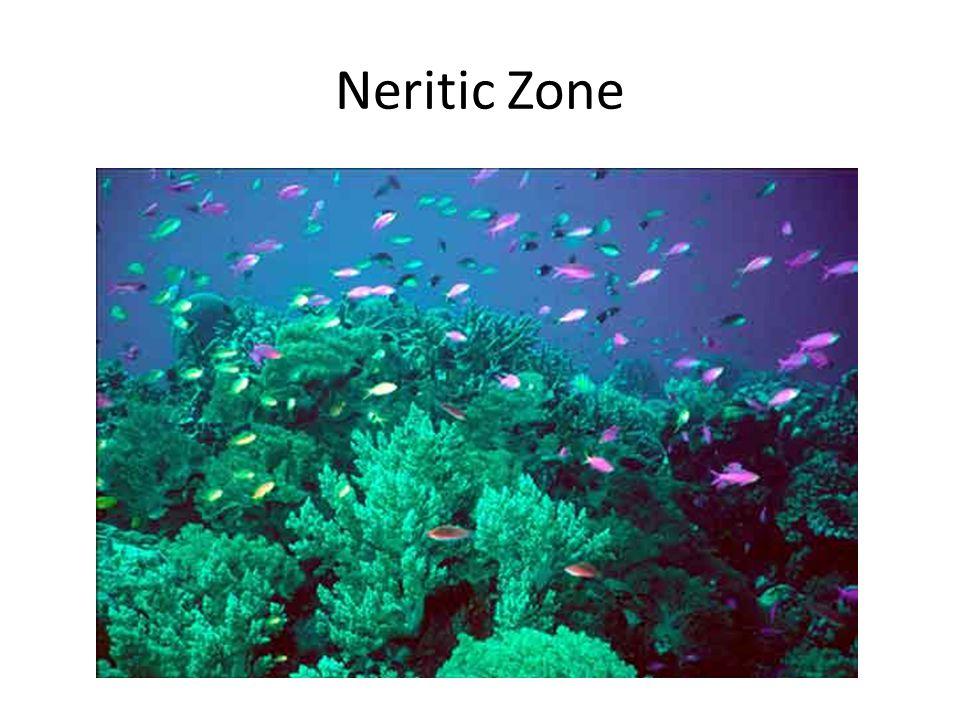 Neritic Zone