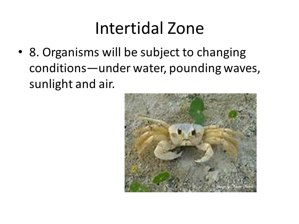 Intertidal Zone 8. Organisms will be subject to changing conditions—under water, pounding waves, sunlight and air.