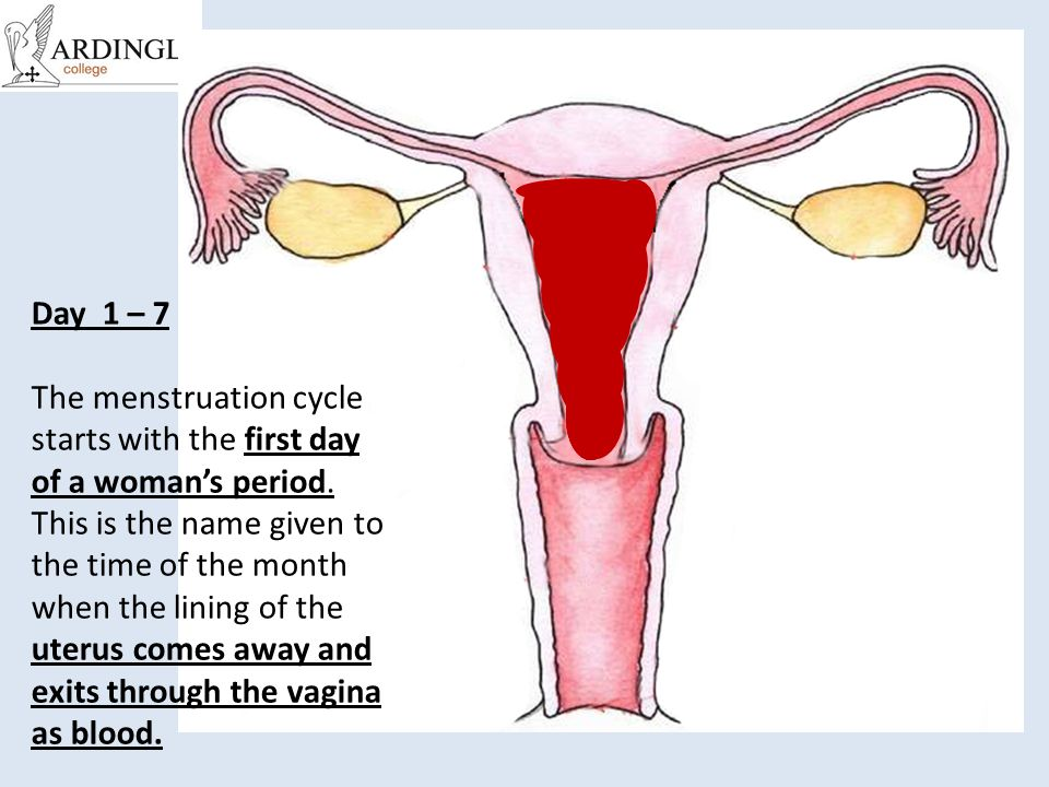 Day 1 – 7 The menstruation cycle starts with the first day of a woman's period.