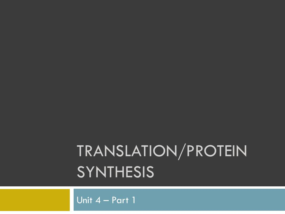 TRANSLATION/PROTEIN SYNTHESIS Unit 4 – Part 1