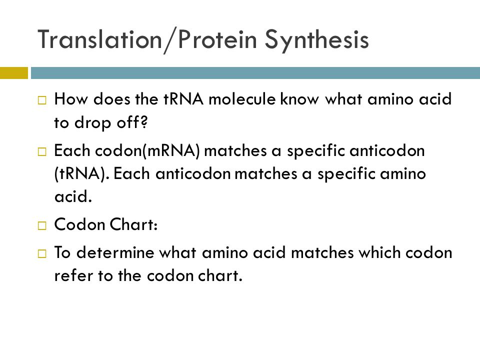 Translation/Protein Synthesis  How does the tRNA molecule know what amino acid to drop off.
