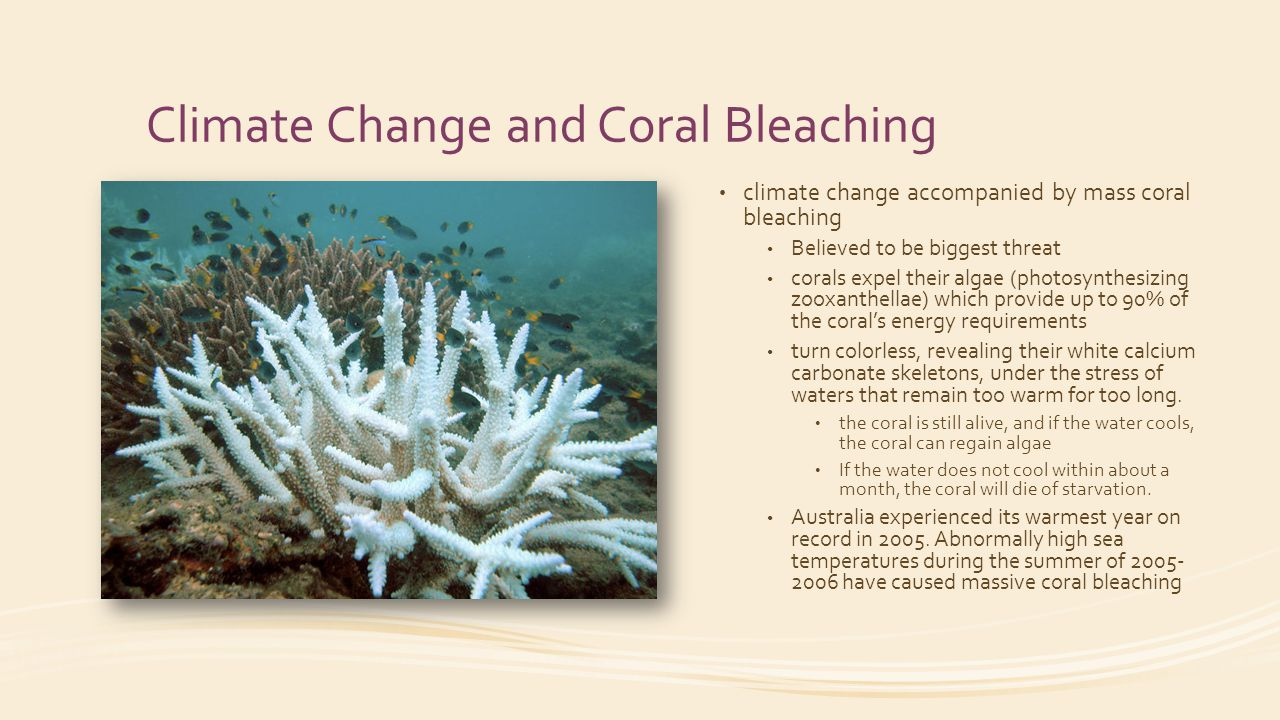 climate change coral bleaching and the