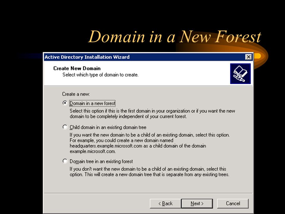 Domain in a New Forest