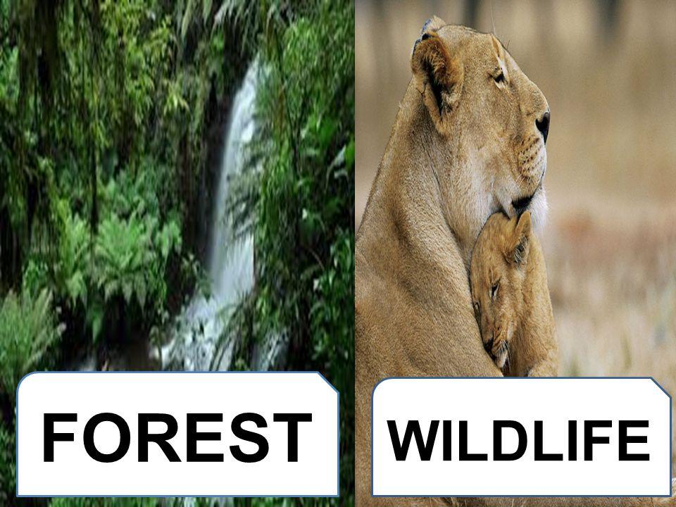 FOREST WILDLIFE