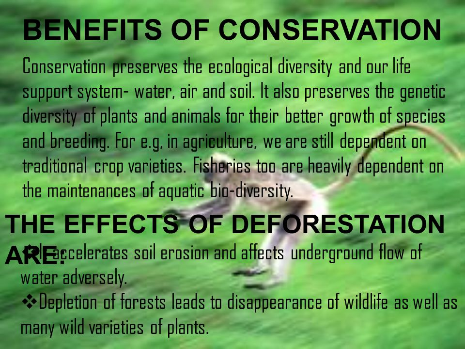 BENEFITS OF CONSERVATION Conservation preserves the ecological diversity and our life support system- water, air and soil.