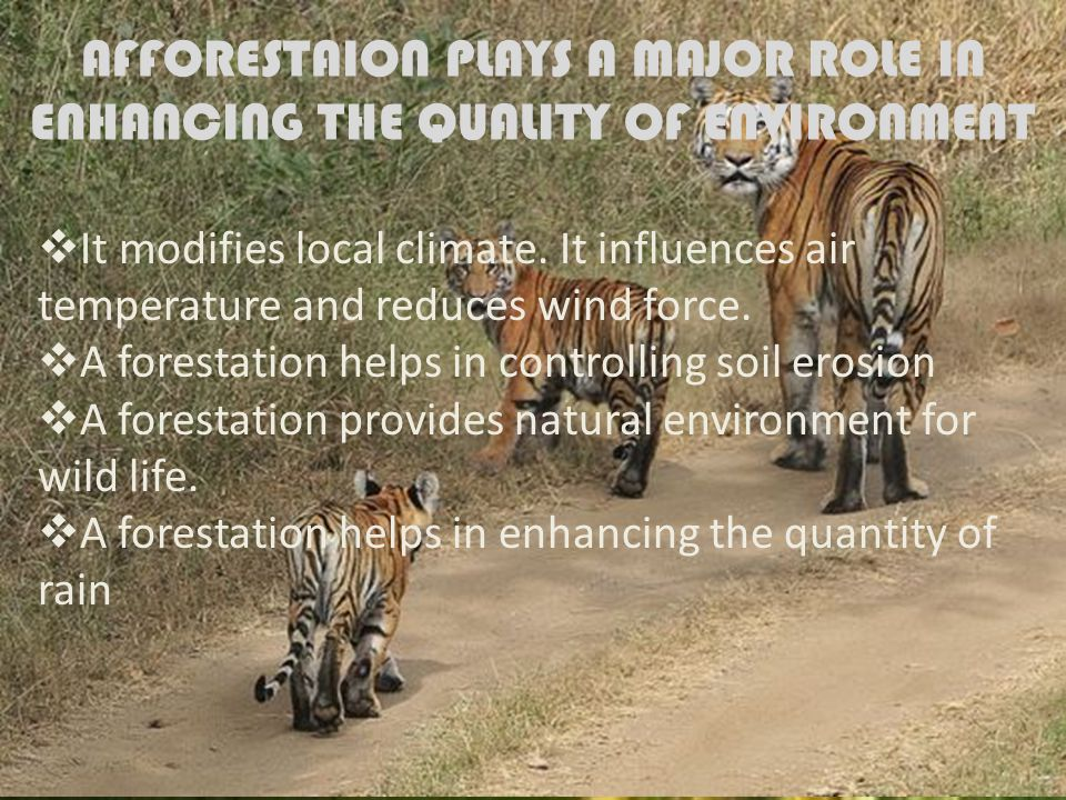 AFFORESTAION PLAYS A MAJOR ROLE IN ENHANCING THE QUALITY OF ENVIRONMENT  It modifies local climate.
