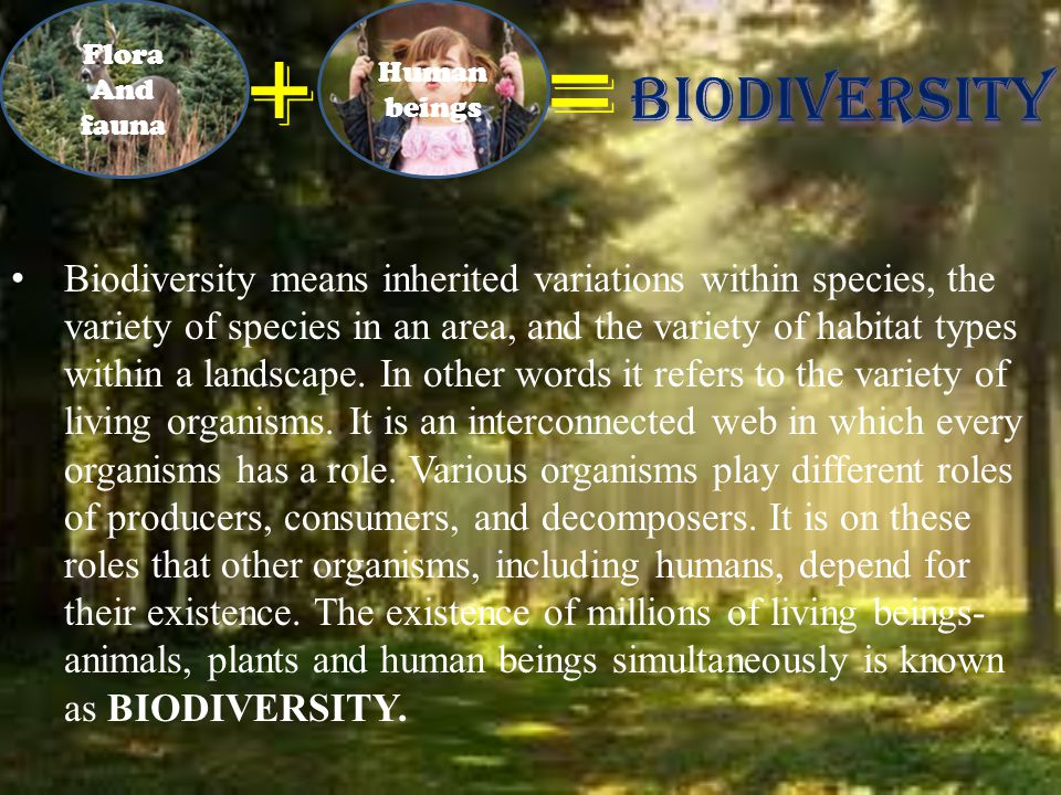 Biodiversity means inherited variations within species, the variety of species in an area, and the variety of habitat types within a landscape.