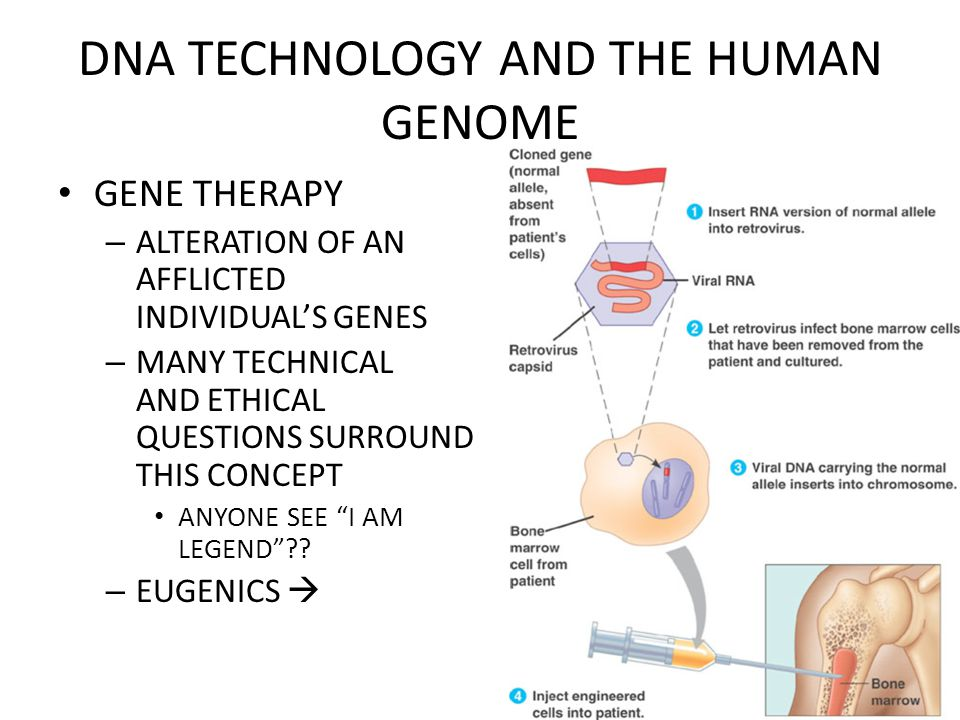 DNA TECHNOLOGY AND THE HUMAN GENOME GENE THERAPY – ALTERATION OF AN AFFLICTED INDIVIDUAL'S GENES – MANY TECHNICAL AND ETHICAL QUESTIONS SURROUND THIS CONCEPT ANYONE SEE I AM LEGEND .