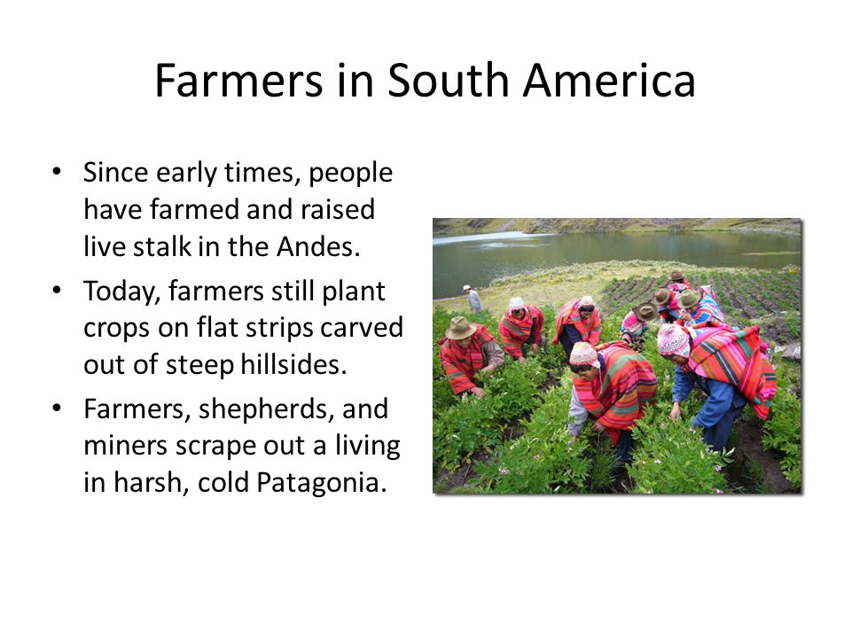 Farmers in South America Since early times, people have farmed and raised live stalk in the Andes.