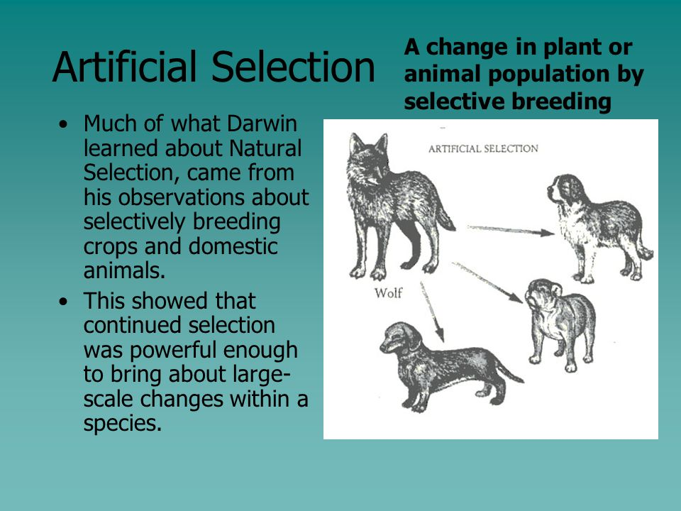 Natural Selection Examples In Nature