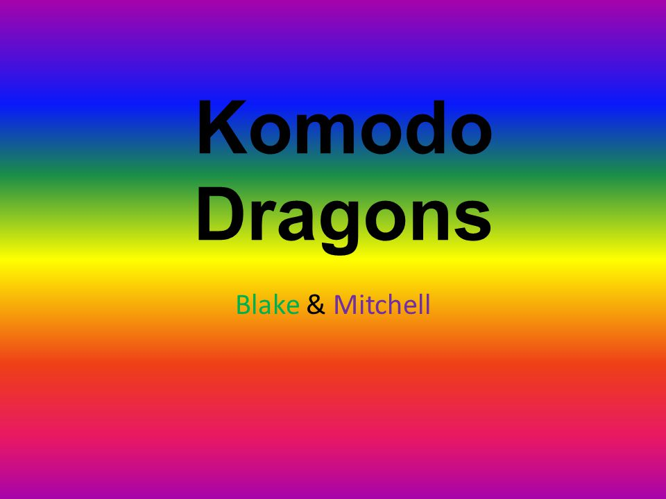 Komodo Dragons Blake & Mitchell