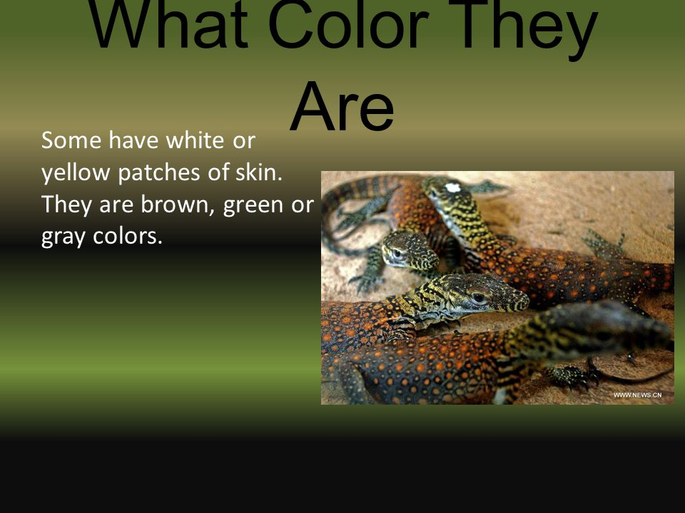 What Color They Are Some have white or yellow patches of skin.