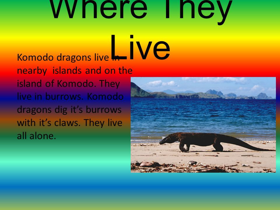 Where They Live Komodo dragons live in nearby islands and on the island of Komodo.