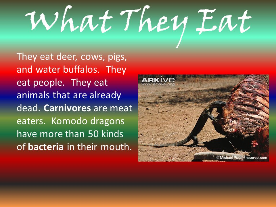 What They Eat They eat deer, cows, pigs, and water buffalos.