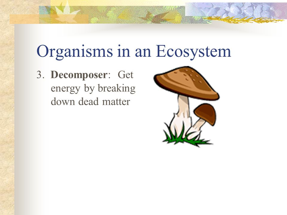 Organisms in an Ecosystem 3. Decomposer: Get energy by breaking down dead matter