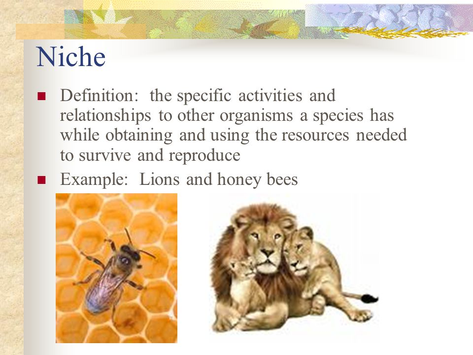 Niche Definition: the specific activities and relationships to other organisms a species has while obtaining and using the resources needed to survive and reproduce Example: Lions and honey bees