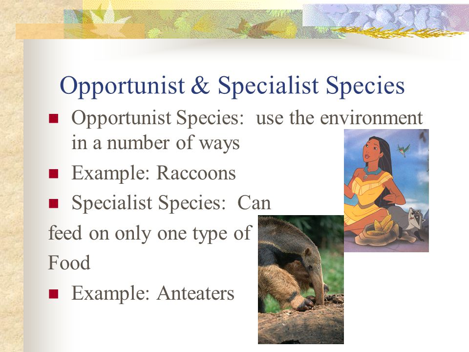 Opportunist & Specialist Species Opportunist Species: use the environment in a number of ways Example: Raccoons Specialist Species: Can feed on only one type of Food Example: Anteaters