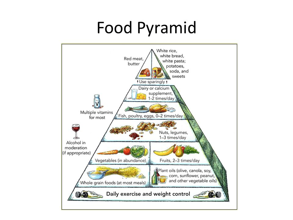 an introduction to the plants the basis of the food pyramid