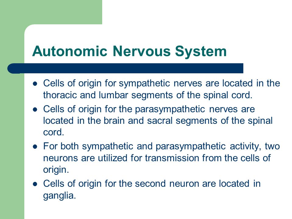 Autonomic Nervous System Cells of origin for sympathetic nerves are located in the thoracic and lumbar segments of the spinal cord.