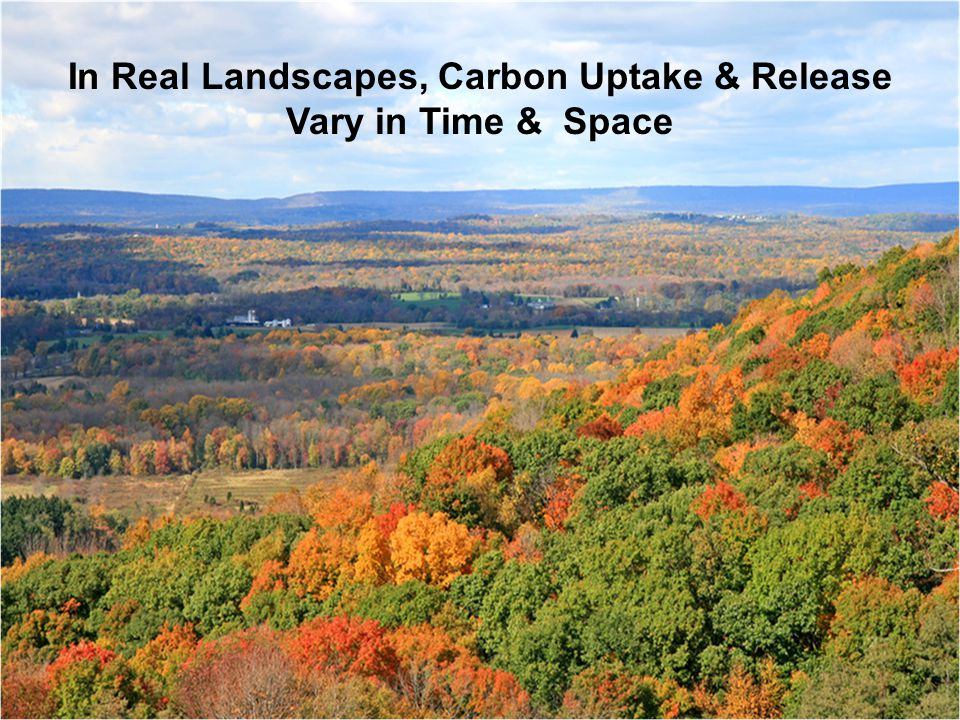In Real Landscapes, Carbon Uptake & Release Vary in Time & Space