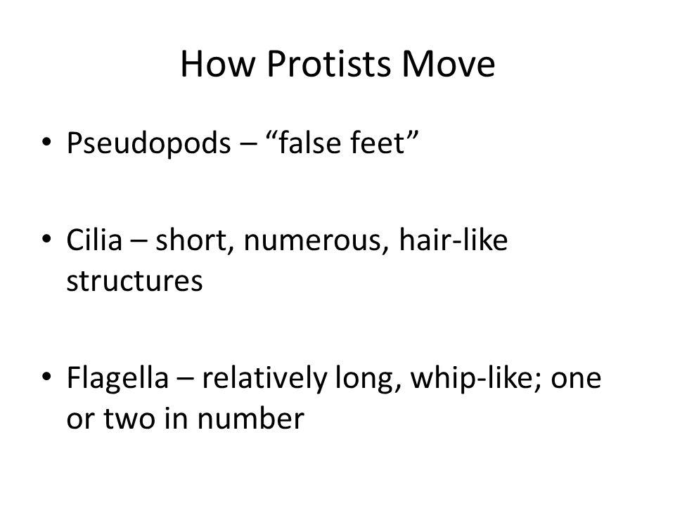 How Protists Move Pseudopods – false feet Cilia – short, numerous, hair-like structures Flagella – relatively long, whip-like; one or two in number